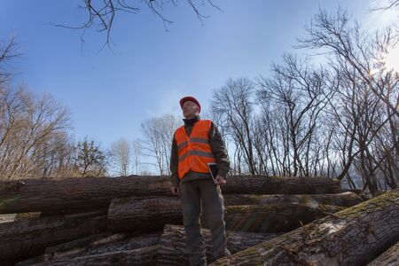 Mature lumber engineer with helmet holding tablet and standing on tree trunks in forest Stock fotó