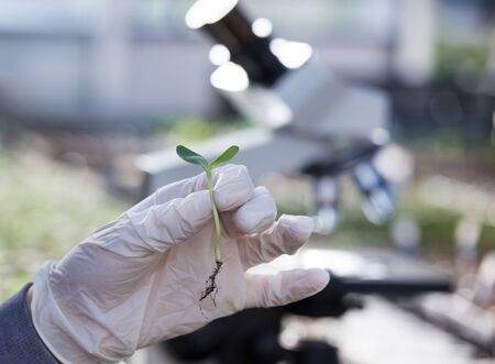 Close up of biologist's hand with protective gloves holding sprout with microscope in background. Biotechnology, plant care and protection concept Foto de archivo