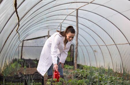 Woman agronomist in white coat watering seedlings from water can in greenhouse Foto de archivo