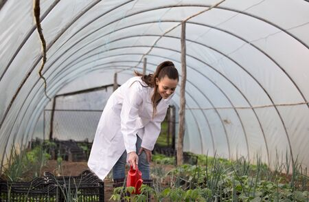 Woman agronomist in white coat watering seedlings from water can in greenhouse Фото со стока