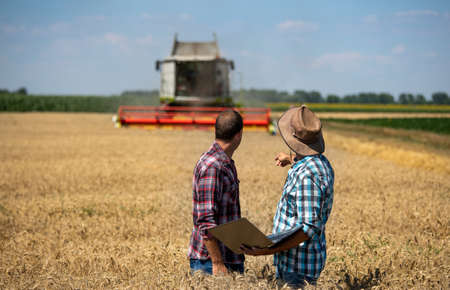 Two farmers with laptop standing in wheat field during harvest. Combine harvester working in background