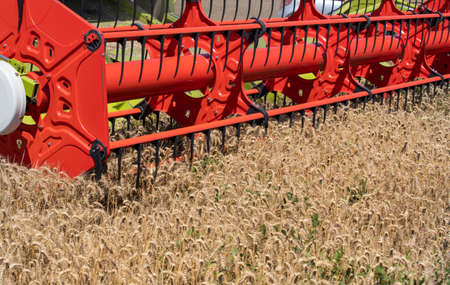 Close up of combine harvester header working in ripe golden barley field in summer time