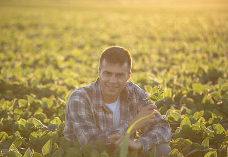 Handsome farmer squatting in soybean field at sunset in summer time Archivio Fotografico