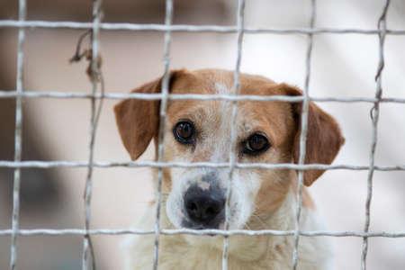 Close up of sad cute dog behind wire fence. Animal abundance concept Archivio Fotografico