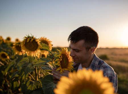 Handsome farmer standing in sunflower field in summer at sunset
