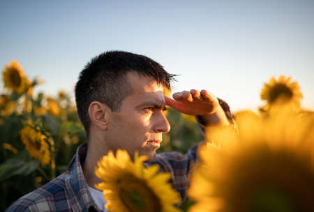 Handsome farmer standing in sunflower field and looking far away in sun