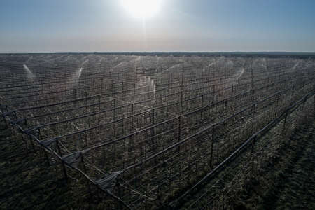 Aerial image of fruit trees protection from frost in modern orchard by spraying trees with water. Ice around bud keeping adequate temperature Archivio Fotografico