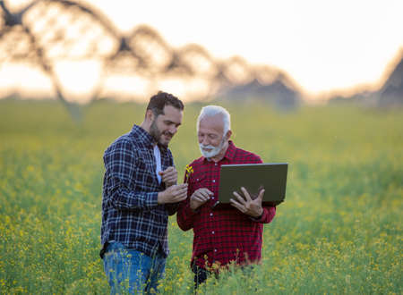 Farmers standing in rapeseed field looking at flower examining showing. Two men using laptop smiling. Center pivot irrigation technology in agriculture. Archivio Fotografico