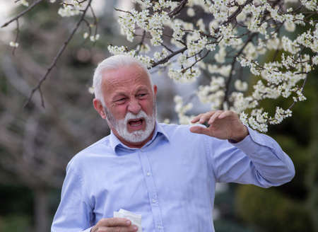Senior man next to flowering tree with open mouth about to cough in springtime suffering from allergies.