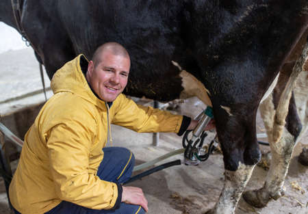 Young farmer using automatic milking machine. Man crouching next to Holstein cow smiling satisfied.