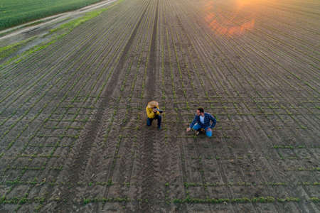 Two farmers in field checking doing quality control. Picture taken with drone of two men taking photo of field plants using technology in agriculture. Archivio Fotografico