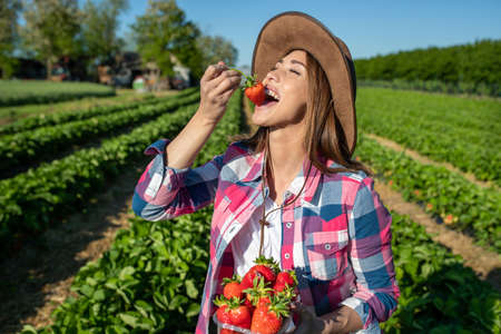Pretty young farmer woman with hat holding bowl full of fruits and eating ripe strawberry in field after harvest