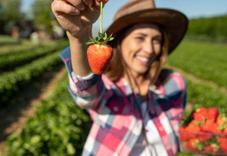 Pretty farmer woman holding fresh strawberries picked on plantation behind