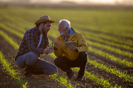 Farmers crouching in corn field using modern technology for agriculture. Two men showing corn plant seedling pointing explaining learning. Archivio Fotografico