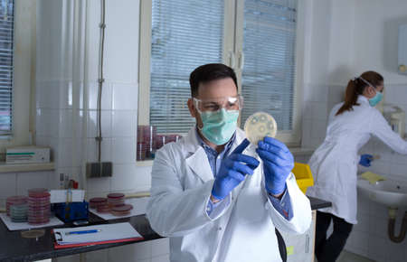 Young doctor researcher in laboratory experimenting using sample in Petri dish. Scientists working in hospital lab. Archivio Fotografico