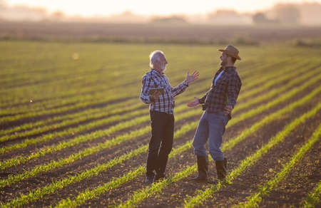 Farmers standing in corn field talking. Two men excited using tablet for agriculture modern innovation. Archivio Fotografico