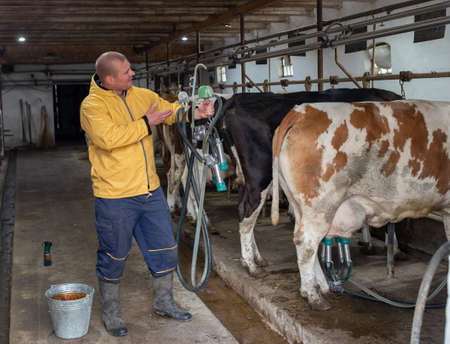 Young farmer standing in facilities showing milking machine. Man next to Simmental and Holstein cows dairy industry