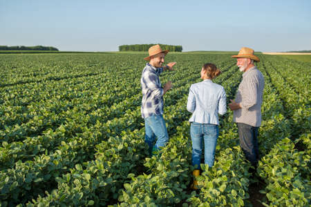 Female insurance sales representative walking in soy field between two male farmers. Three people talking about agriculture pointing explaining.