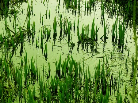 swamp, wetland scenery