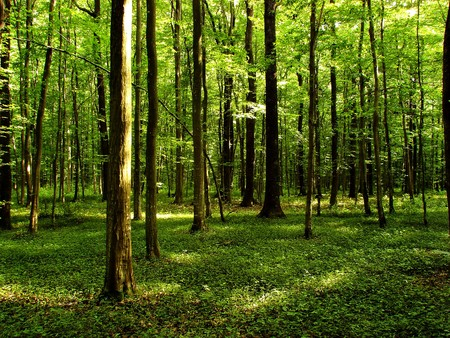 Beautiful wild forest with clean air in it. Ideal for meditation and relaxation.