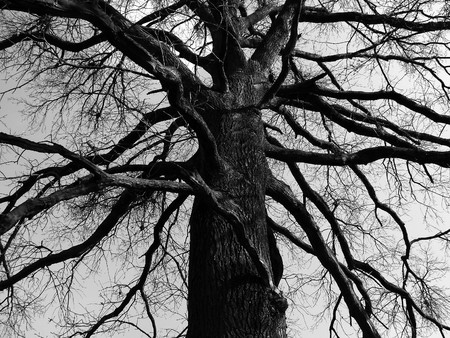 a very old mystical tree with a lot of branches                        Stock Photo