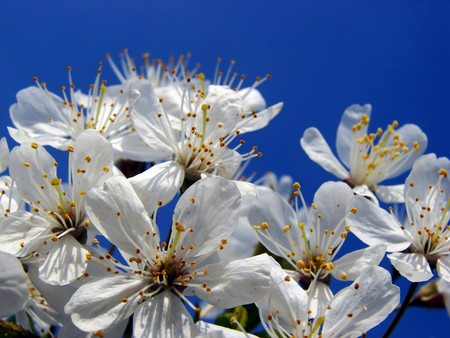beautiful white flowers flowering in the spring Stock Photo