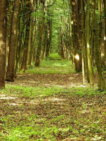 Spiritual path in a beautiful fresh forest Stock Photo