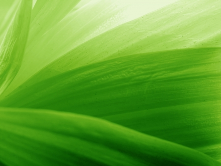 green leaves background 版權商用圖片