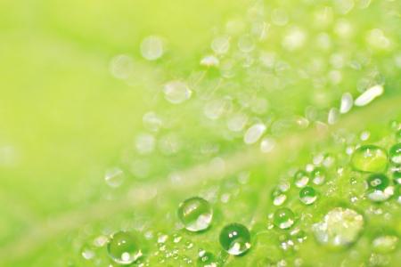 緑の葉の上の露します。
