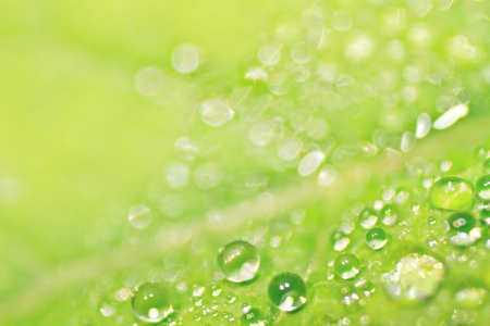 dew on green leaf
