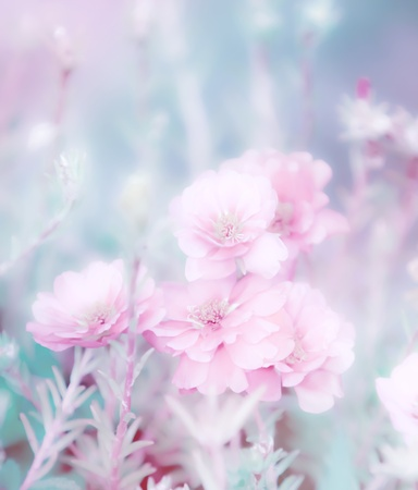 beautiful flowers made with color filters Stock Photo