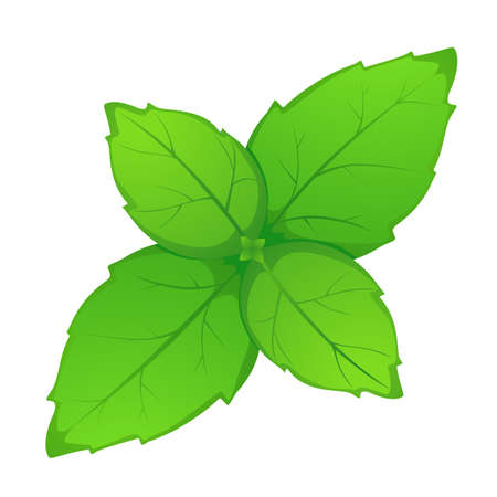 young green leaf on white background Illustration