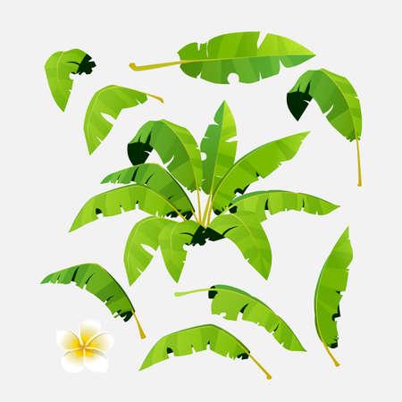 Set of palm leaves for design. Vector illustration