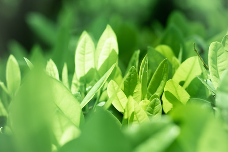 Nature green leave tree bokeh.