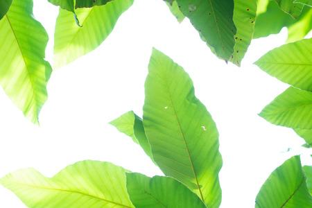 Close up Nature Tree