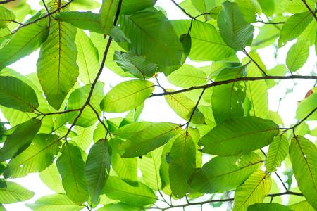 Full frame shot of leaved tree background