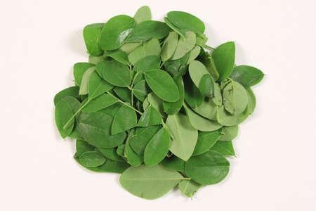 Moringa leafs Stock Photo