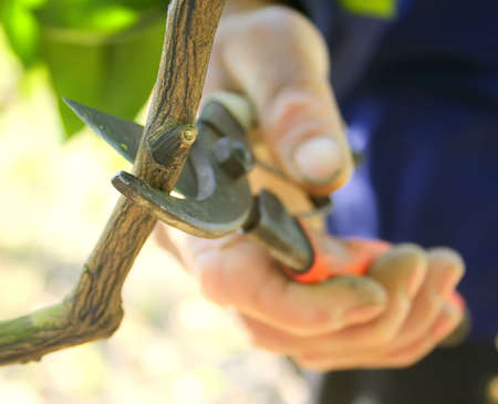 pruning: Pruning branches in the yard. Stock Photo