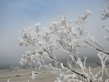 naturopath: a frozen field seen through iced over branches on a Winters day. Stock Photo