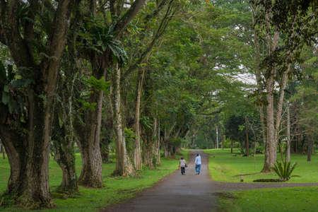 onward: Walking on a country lane