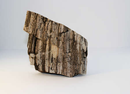 Black and White Petrified Wood. This came off my old property in Arizona.