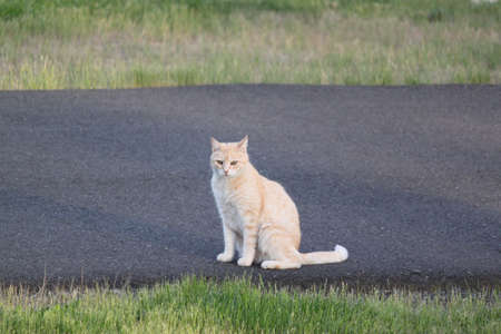 Tommy The Tom Cat is waiting for his owners to go for a walk