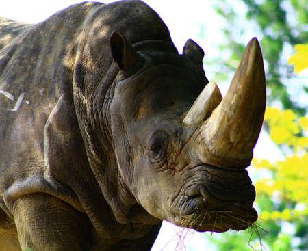 rhino 版權商用圖片