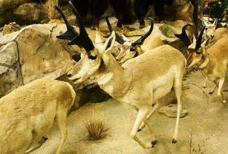runing: deer runing