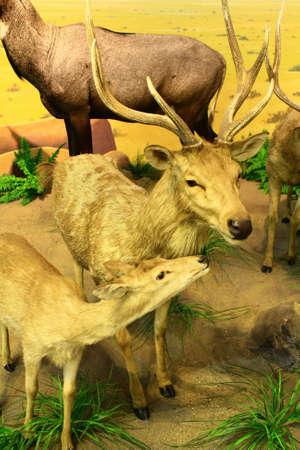 the offspring: ciervos madre con hijos