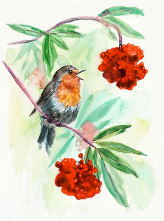 robin bird: Robin on a branch. Bird with berries. Decoration with wildlife scene. Pattern from forest inhabitant. Water color painting. Birds background, watercolor composition. Illustration Stock Photo