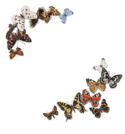 free place: Butterflies with free space for your text in the middle, hand drawing, watercolor illustration. Russian butterflies. Place for your text Stock Photo