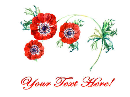 anemone: Three red flowers anemone. Watercolor painting. Greeting cards. Flower background, watercolor composition. Flower backdrop. Stock Photo