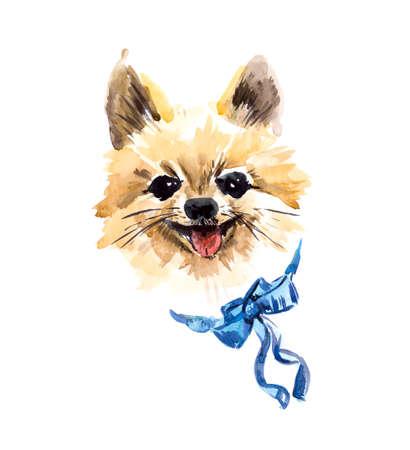 spitz: German Spitz. Portrait small dog. Watercolor hand drawn illustration Stock Photo