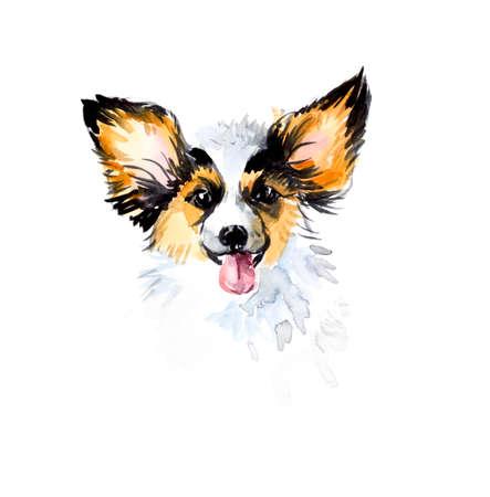 small dog: Papillon. Portrait small dog. Watercolor hand drawn illustration